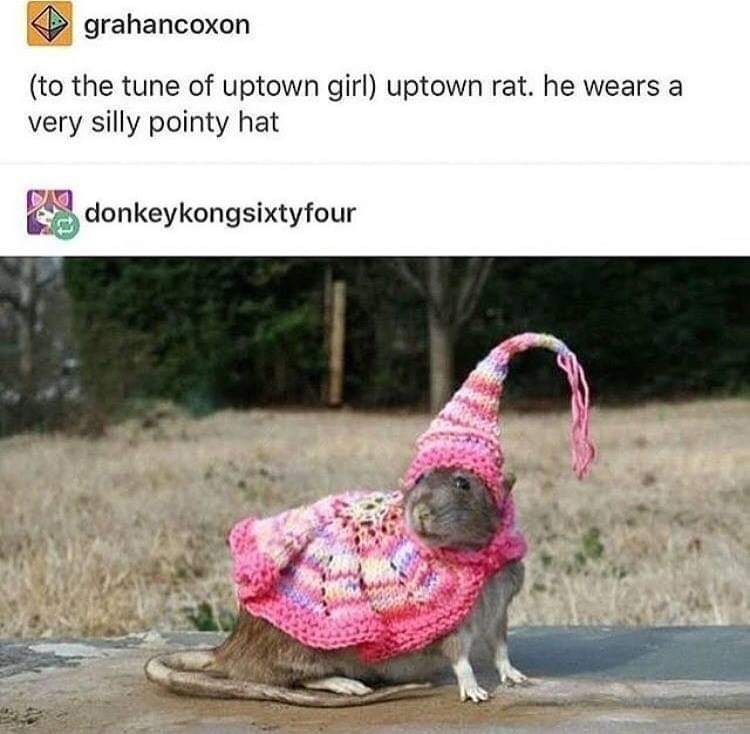 "Tumblr post that reads, ""(To the tune of Uptown Girl) Uptown rat. He wears a very silly pointy hat"" above a pic of a rat wearing a little costume with a pointy hat"