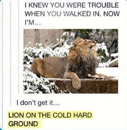 Wildlife - I KNEW YOU WERE TROUBLE WHEN YOU WALKED IN. NOW I'M... I don't get it... LION ON THE COLD HARD GROUND