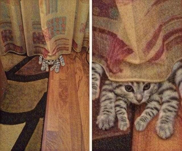 weird perspective pics - Cat