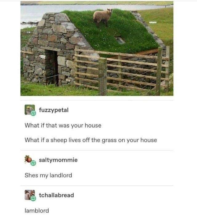 meme of a sheep that lives on your roof and is your lamblord