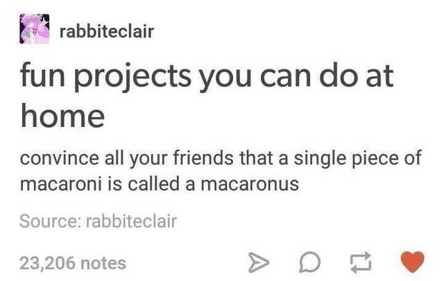 Text - rabbiteclair fun projects you can do at home convince all your friends that a single piece of macaroni is called a macaronus Source: rabbiteclair 23,206 notes