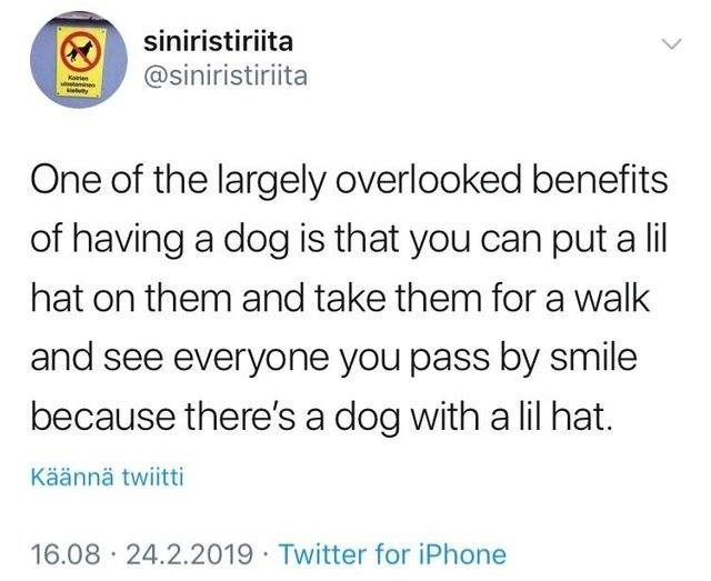 Text - siniristiriita @siniristiriita Koten amin ty One of the largely overlooked benefits of having a dog is that you can put a lil hat on them and take them for a walk and see everyone you pass by smile because there's a dog with a lil hat. Käännä twiitti 16.08 24.2.2019 Twitter for iPhone