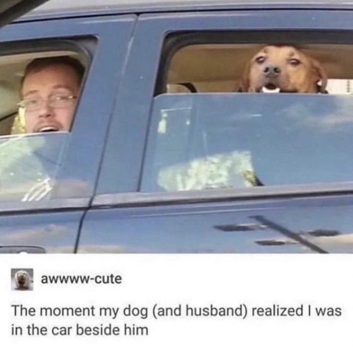 Vehicle door - awwww-cute The moment my dog (and husband) realized I was in the car beside him