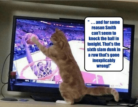 When a wizard\'s cat watches basketball