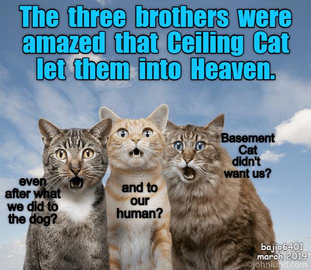 heaven Cats cat memes - 9279860992