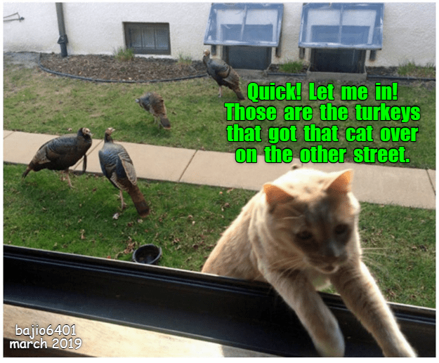 THINGS DIDN\'T TURN OUT GOOD FOR THAT OTHER CAT