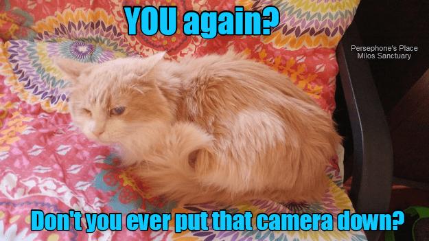 Kitty has no privacy...