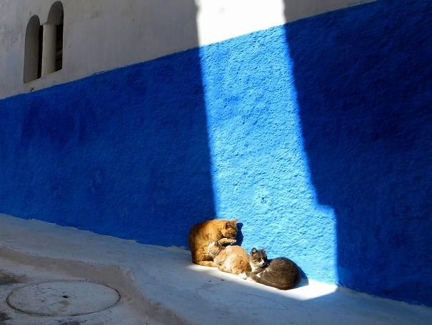 daylight savings nap - Blue