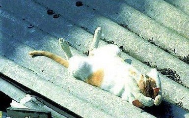 daylight savings nap - Cat
