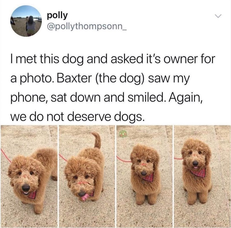 wholesome meme - Dog - polly @pollythompsonn Imet this dog and asked it's owner for a photo. Baxter (the dog) saw my phone, sat down and smiled. Again, we do not deserve dogs.