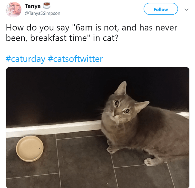 """Cat - Tanya @TanyaSSimpson Follow How do you say """"6am is not, and has never been, breakfast time"""" in cat? #caturday #catsoftwitter"""