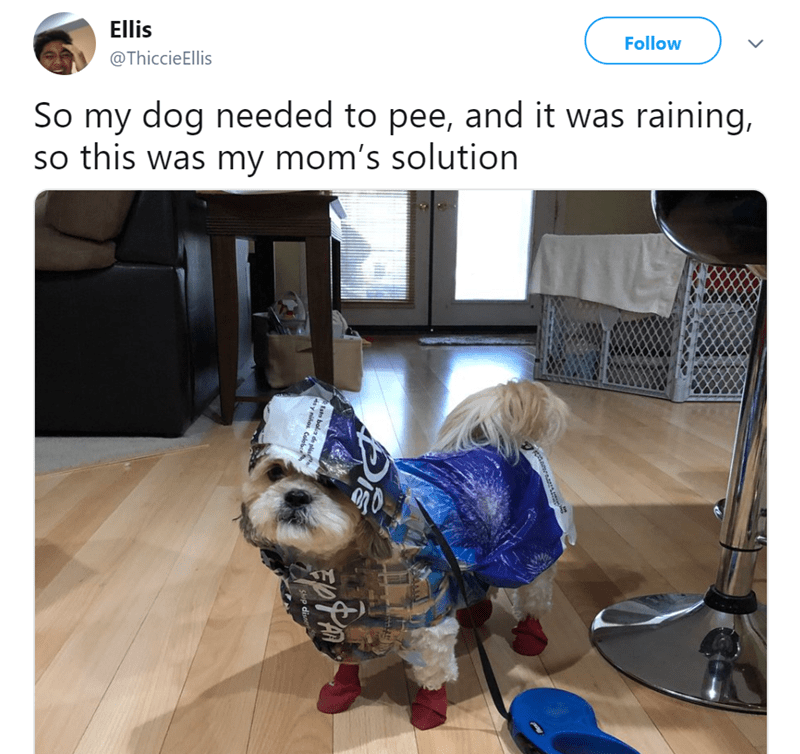 Dog clothes - Ellis Follow @ThiccieEllis So my dog needed to pee, and it was raining, so this was my mom's solution gnarass Esto bola de pl y nihos Colebe Shep disne