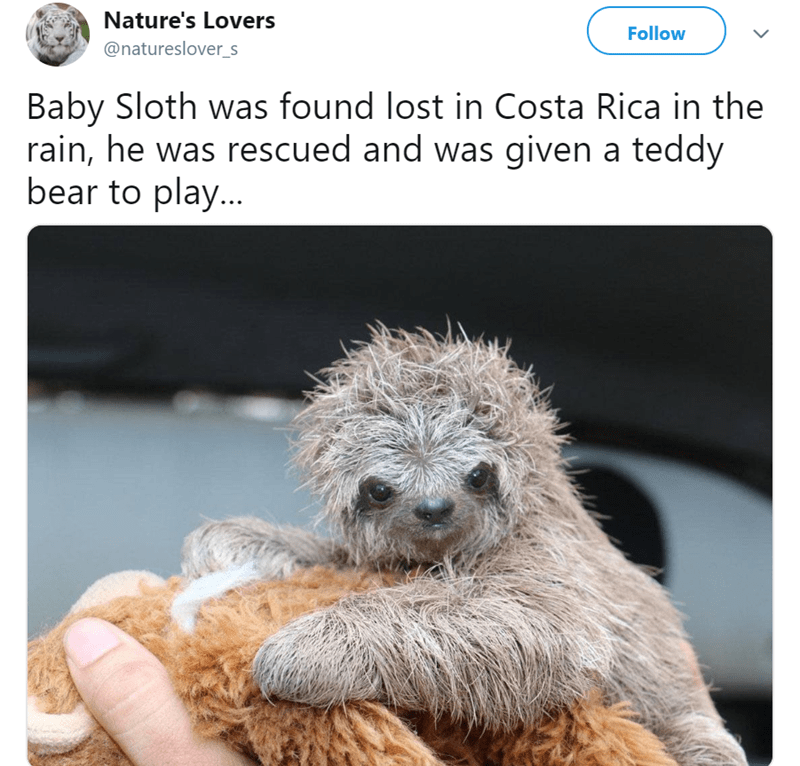Organism - Nature's Lovers Follow @natureslover_s Baby Sloth was found lost in Costa Rica in the rain, he was rescued and was given a teddy bear to play...