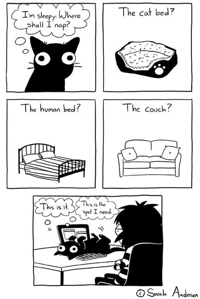 Cartoon - The cat bed? In sleepy. Where shall I nap? The couch? The human bed? This is the This is it. spot I need. Seah Aadesen