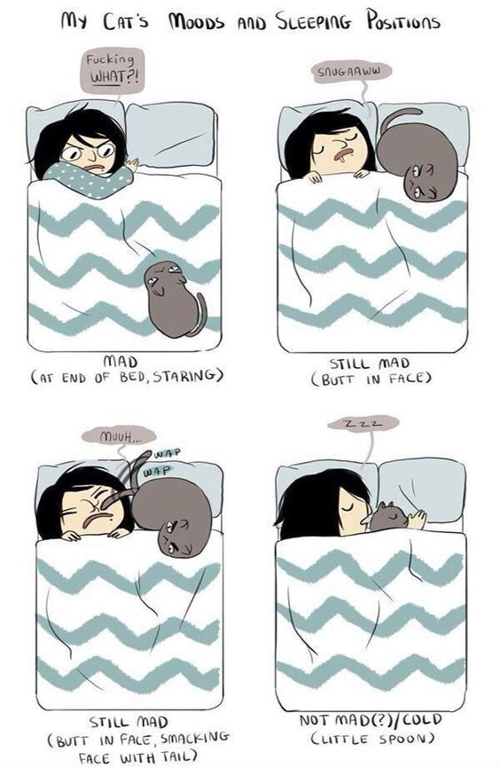 Cartoon - My CAT'S MooDs Ano SLEEPING PosTIons Fucking WHAT?! SNUGAAWW MAD (AT END OF BED, STARING STILL MAD (BUTT IN FACE) muuH.. WAP NOT MAD)/CoLD CLITTLE SPOON STILL MAD BUTT IN FALE, SMACKING FACE WITH TAIL)