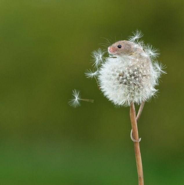 cute animals - dandelion