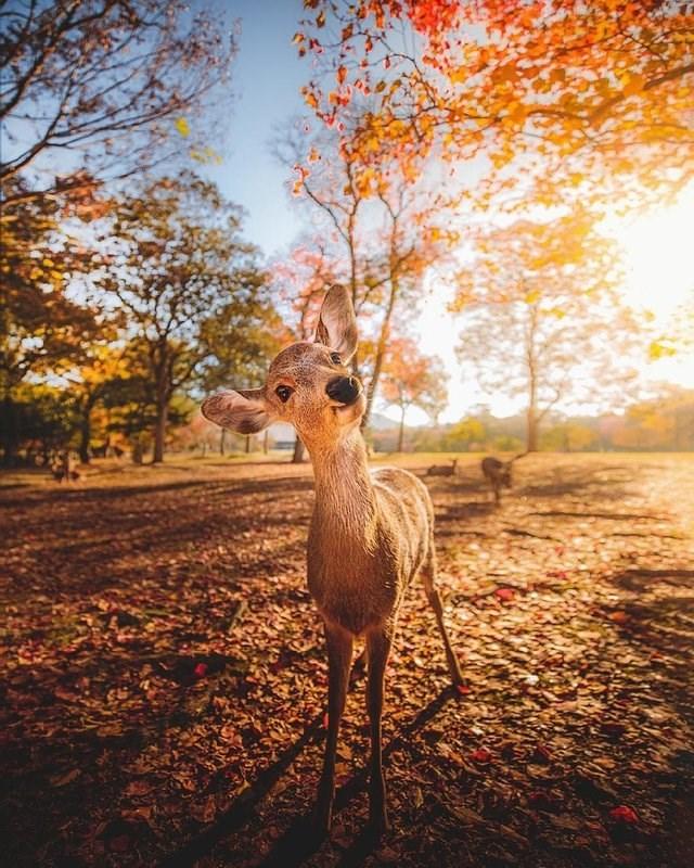 cute animals - Nature