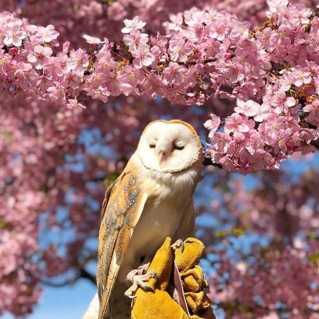 cute animals - Bird
