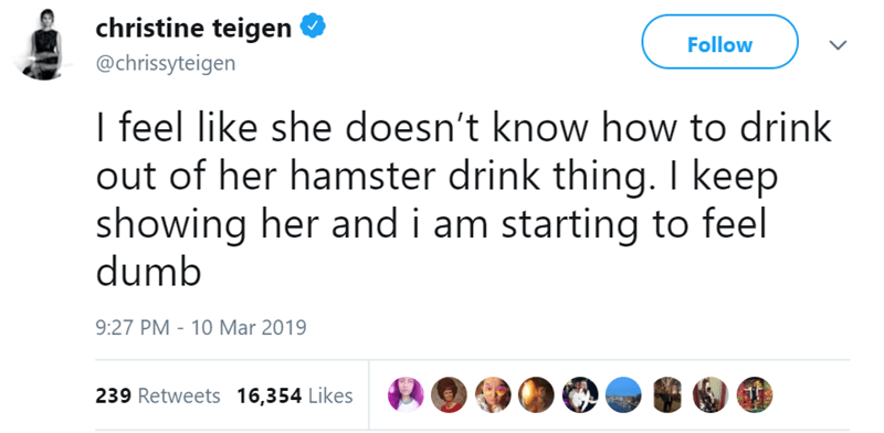 Text - christine teigen Follow @chrissyteigen I feel like she doesn't know how to drink out of her hamster drink thing. I keep showing her and i am starting to feel dumb 9:27 PM 10 Mar 2019 239 Retweets 16,354 Likes