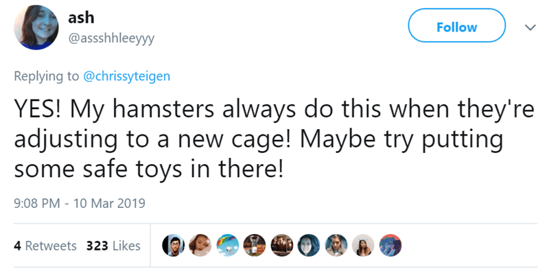 Text - ash Follow @assshhleeyyy Replying to @chrissyteigen YES! My hamsters always do this when they're adjusting to a new cage! Maybe try putting some safe toys in there! 9:08 PM - 10 Mar 2019 4 Retweets 323 Likes