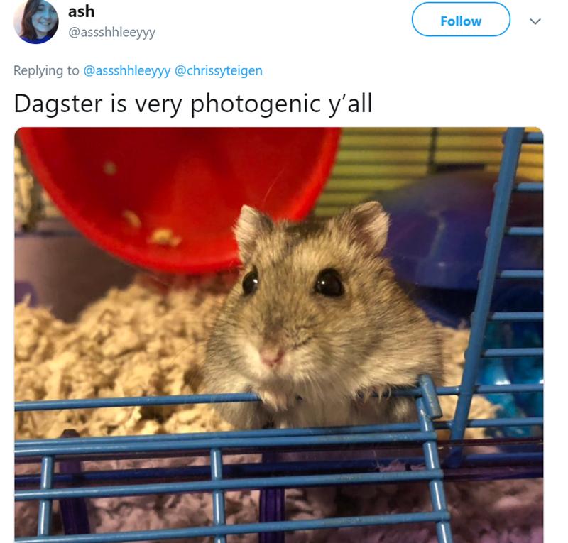 Rat - ash Follow @assshhleeyyy Replying to @assshhleeyyy @chrissyteigen Dagster is very photogenic y'all