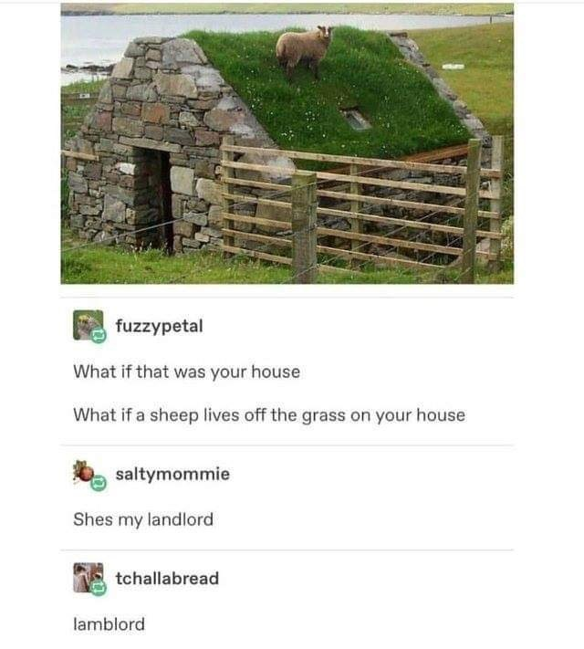 sheep standing on grassy roof of stone cottage What if that was your house What if a sheep lives off the grass on your house Shes my landlord lamblord