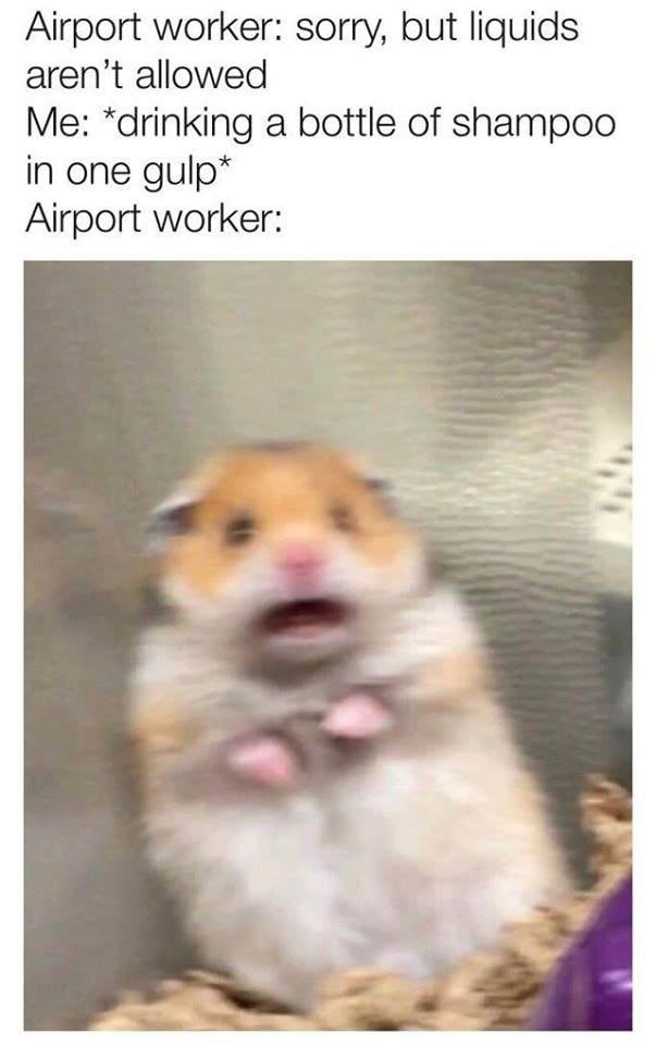 hamster looking shocked Airport worker: sorry, but liquids aren't allowed Me: *drinking a bottle of shampo0 in one gulp* Airport worker: