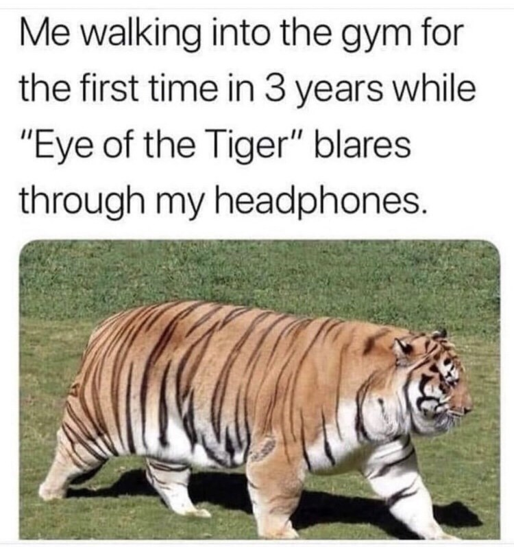 "Caption that reads, ""Me walking into the gym for the first time in three years while 'Eye of the Tiger' blares through my headphones"" above a pic of a fat tiger"