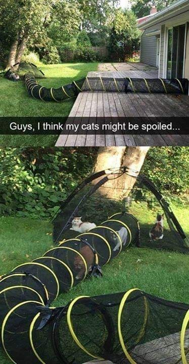 "Pics of cats hanging out in a cat tunnel that leads into the backyard with Snapchat caption that reads, ""Guys, I think my cats might be spoiled..."""