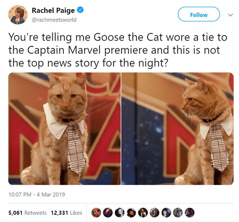 Cat - Rachel Paige Follow @rachmeetsworld You're telling me Goose the Cat wore a tie to the Captain Marvel premiere and this is not the top news story for the night? 10:07 PM 4 Mar 2019 - 5,061 Retweets 12,331 Likes