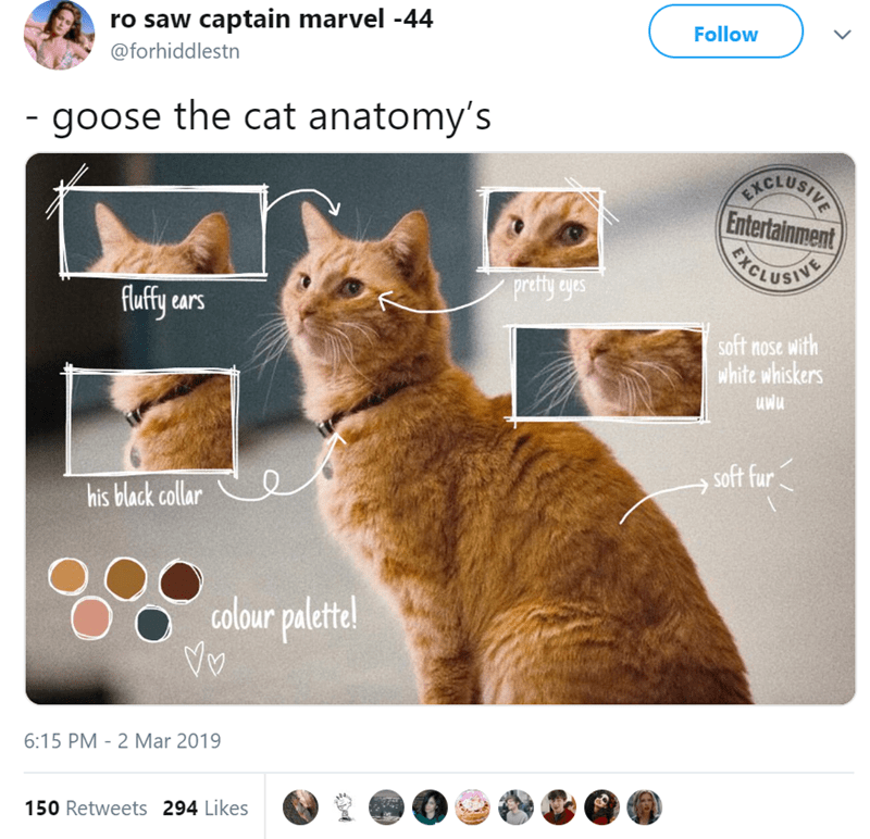 Cat - ro saw captain marvel -44 Follow @forhiddlestn -goose the cat anatomy's VICLUBITE Entertainment PICLUSHTIT pretty eyes ears soft nose with white whiskers soft fur his black collar colour palettel Vv 6:15 PM 2 Mar 2019 150 Retweets 294 Likes