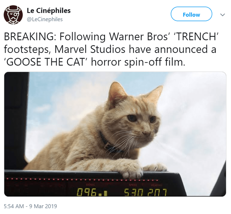 Cat - Le Cinéphiles Follow @LeCinephiles BREAKING: Following Warner Bros' 'TRENCH' footsteps, Marvel Studios have announced a 'GOOSE THE CAT' horror spin-off film. CHAL SPED HEADING 530 207 096. 5:54 AM 9 Mar 2019