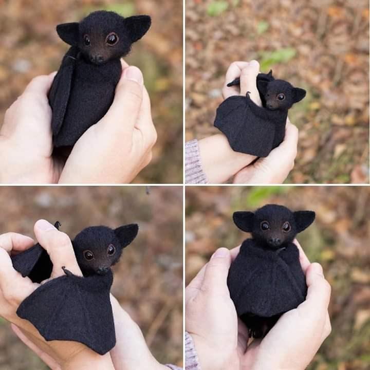 appreciate this cute bat please