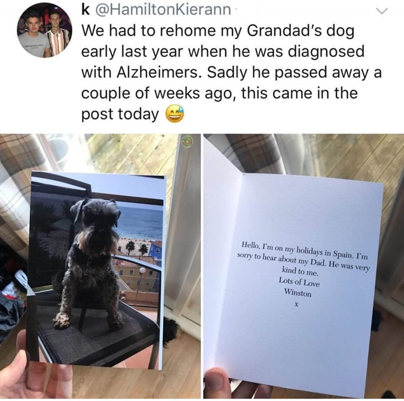 wholesome memes about a dog that sent a letter