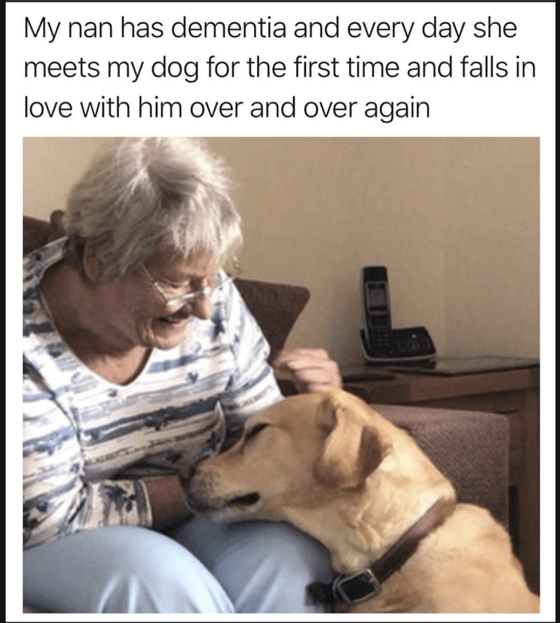 wholesome memes about a grandma with dementia that meets a dog for the first time everyday
