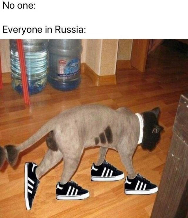 puma wearing four skate shoes on each leg No one: Everyone in Russia: