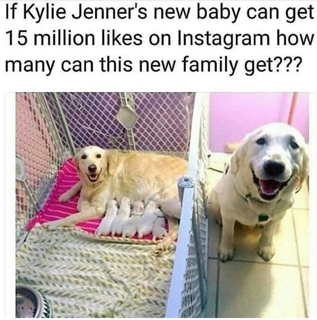 Dog - If Kylie Jenner's new baby can get 15 million likes on Instagram how many can this new family get???