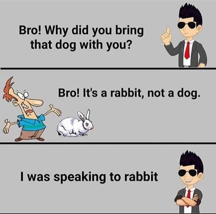 Cartoon - Bro! Why did you bring that dog with you? Bro! It's a rabbit, not a dog. I was speaking to rabbit Vie