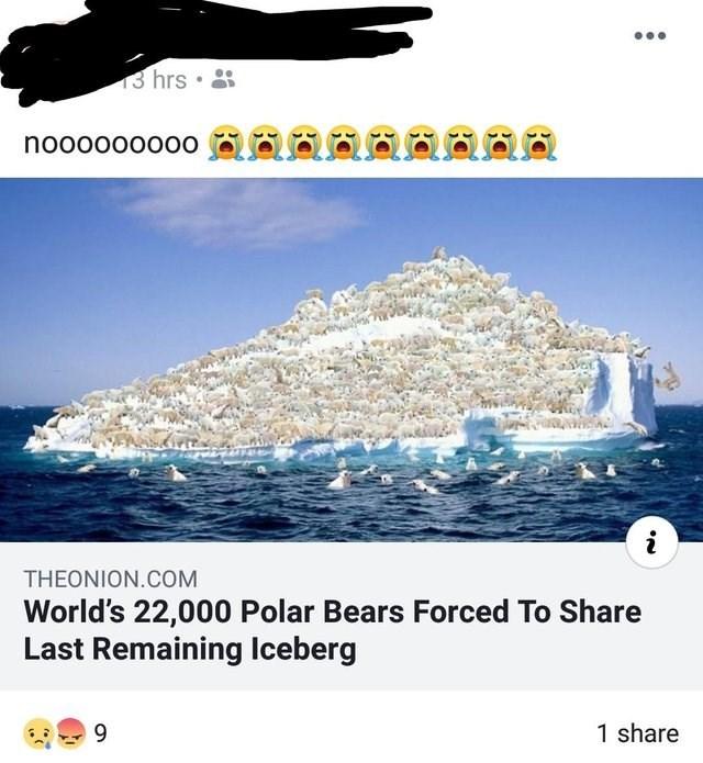 Ocean - 3 hrs nooooo0000 aoSO i THEONION.COM World's 22,000 Polar Bears Forced To Share Last Remaining lIceberg 9 1 share