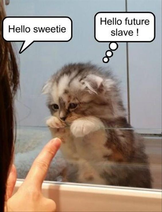 Cat - Hello future Hello sweetie slave!