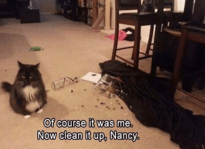 Cat - Of course it was me. Now clean it up, Nancy