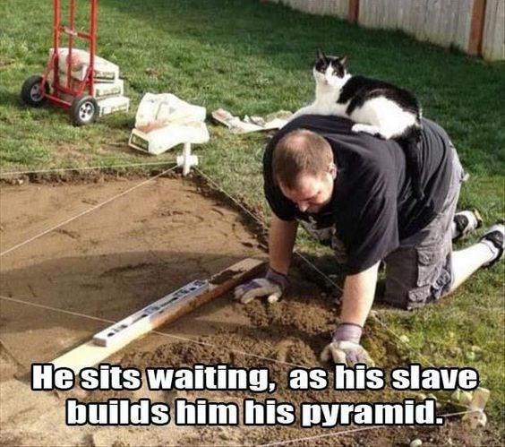 Tree - Hesits waiting, as his slave builds him his Dyramid