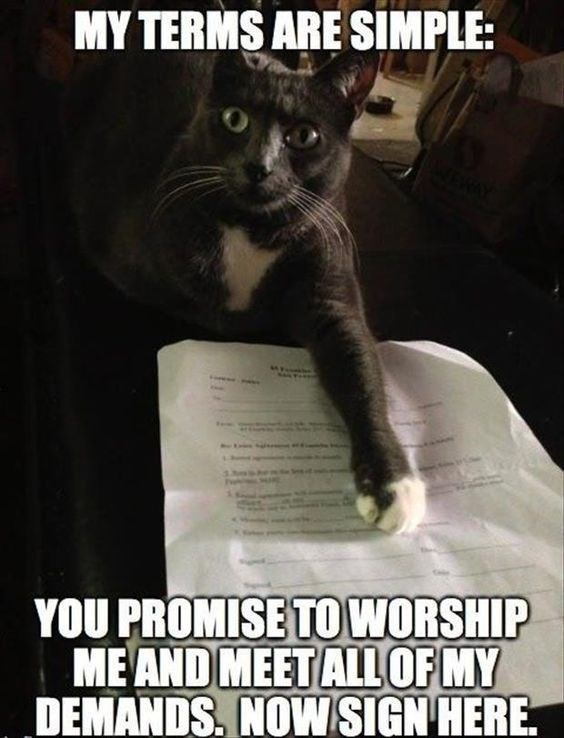 Cat - MY TERMS ARE SIMPLE: YOU PROMISE TO WORSHIP ME AND MEETALLOF MY DEMANDS. NOW SIGN HERE.