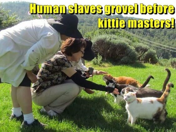 Canidae - Humanslaves grovel before kittie masters!
