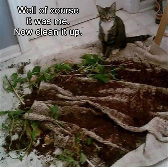 Cat - Well of course it was me. Now clean it up.
