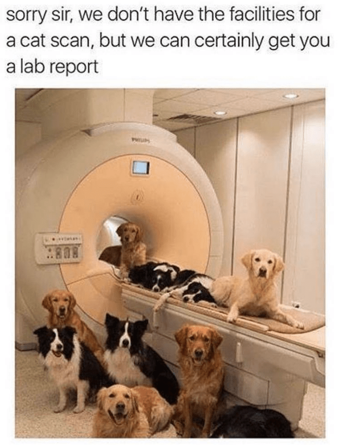 Dog - sorry sir, we don't have the facilities for a cat scan, but we can certainly get you a lab report PH