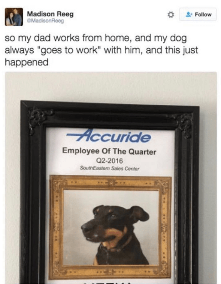 "Dog breed - Madison Reeg eMadisonReeg Follow so my dad works from home, and my dog always ""goes to work"" with him, and this just happened Accuride Employee Of The Quarter Q2-2016 SouthEastern Sales Center"