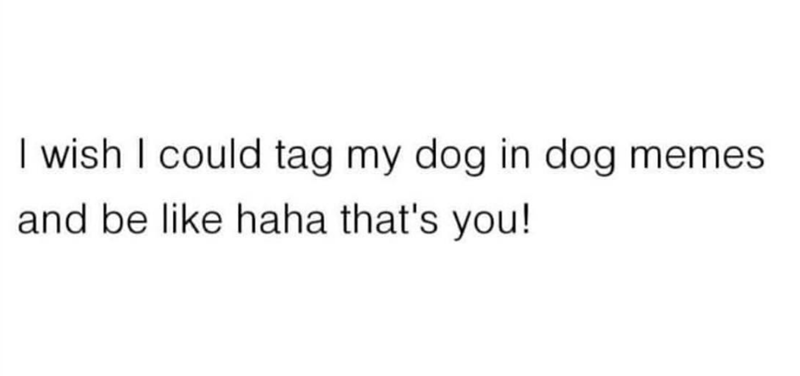 Text - I wish I could tag my dog in dog memes and be like haha that's you!