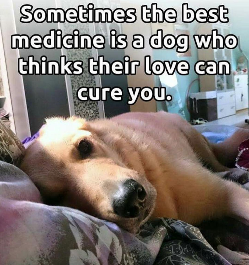 Mammal - Sometimes the best medicine is a dog who thinks their love can Cure you.