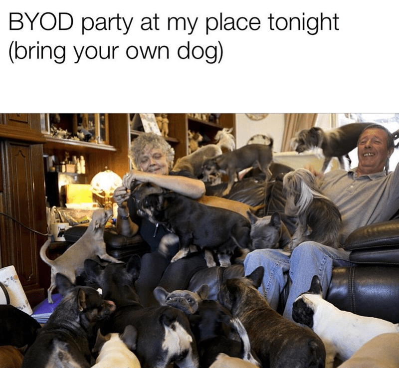 Fur - BYOD party at my place tonight (bring your own dog)